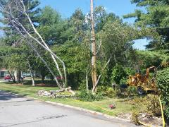 Pelham, NH Storm Cleanup tree brush removal